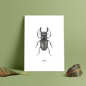 ekoxe tryck, ekoxe affisch, snygga prints